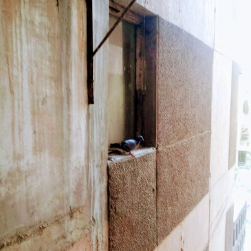 Forgotten window, found window (Zakir Bagh Apartments, Delhi). Photograph by Samprati Pani.