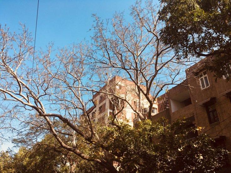Frail modernism (Zakir Bagh Apartments, Delhi).